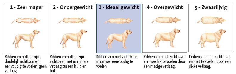 Body condition score hond op vijfpuntsschaal. Bron: http://www.dierenkliniekenkhuizen.nl/