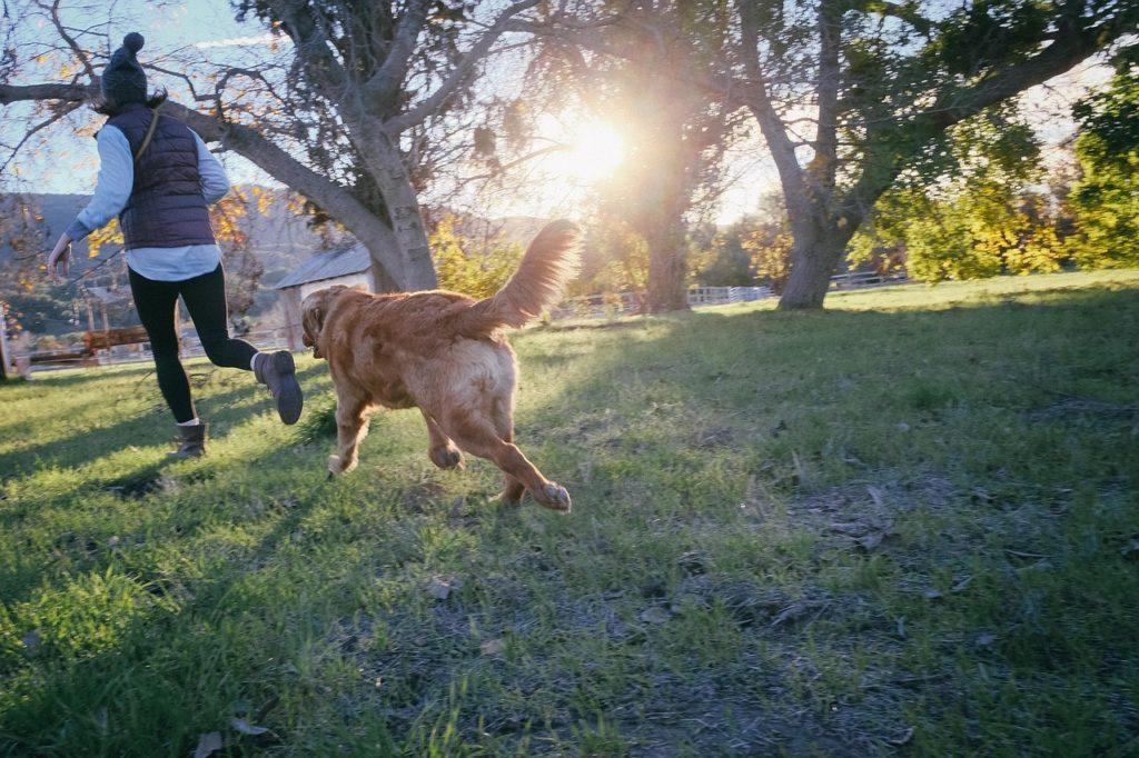Het plezier van een gezond gewicht voor je hond.